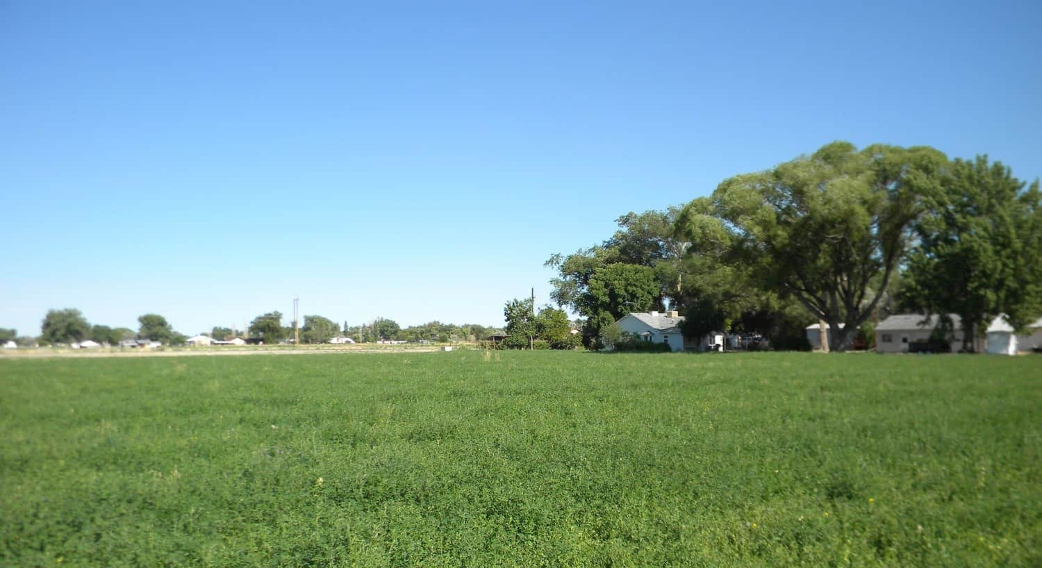 Green field with homes, buildings, and green trees in the background