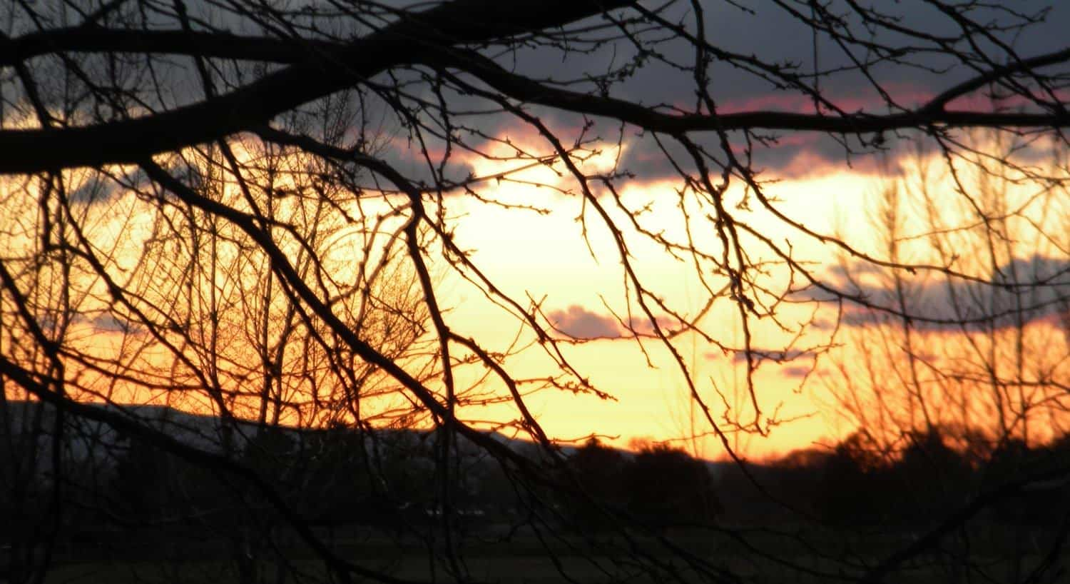 Sunset with bright yellow and orange sky peering through tree branches